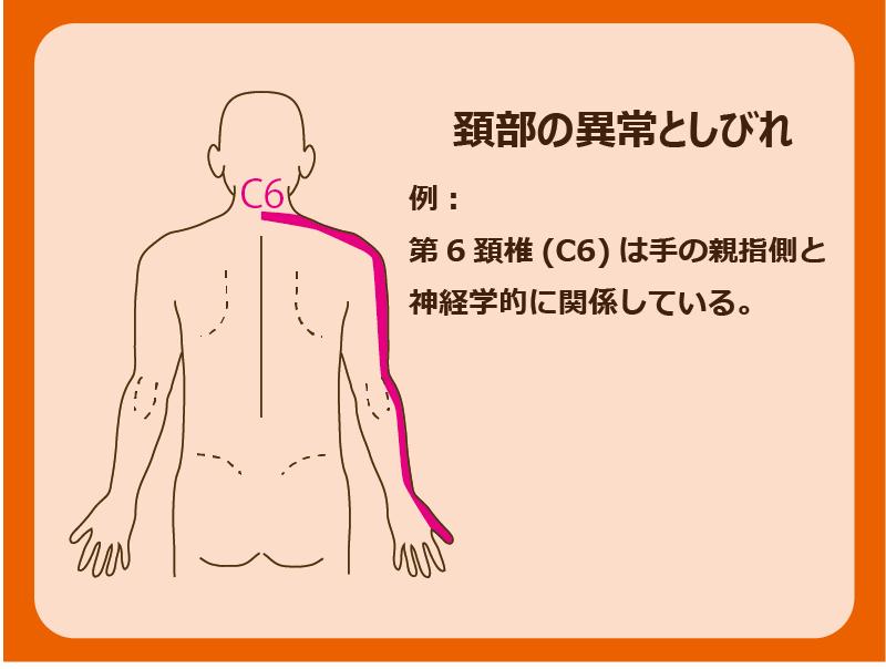 首が手と神経学的に関連している。