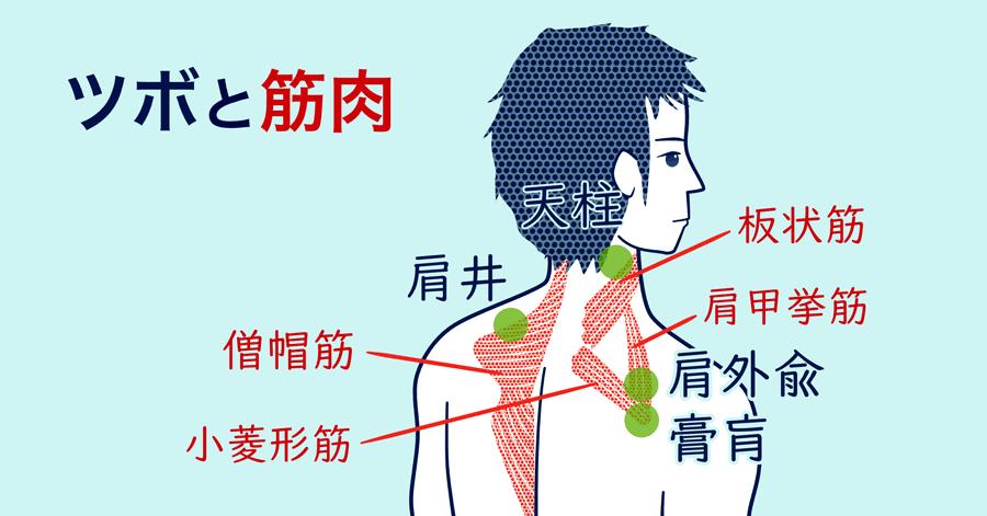 緊張型頭痛と筋肉、ツボの関係