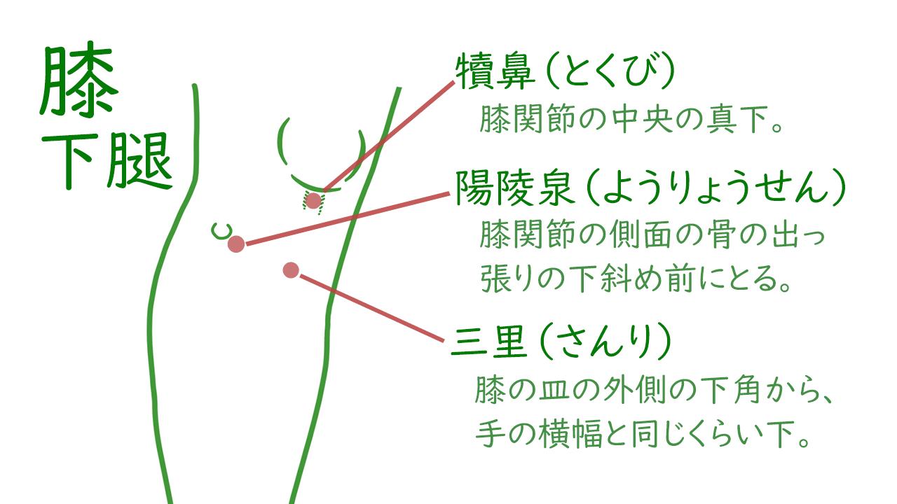膝および下腿のツボ1